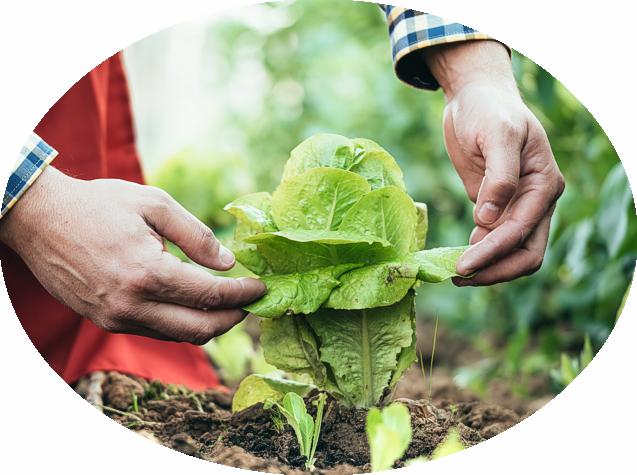 Pflanzenschutzmittel, Dünger und Erden namenhafter Hersteller wie COMPO oder Neudorff gehören wie selbstverständlich zu unserem hochwertigem Sortiment und das getreu nach unserem Motto: Beste Pflanzen brauchen besten Pflege.